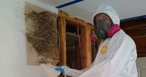 Water Damage Restoration Technician Doing Wall Removal
